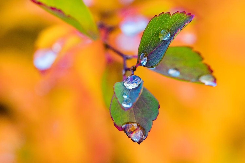 Herbstpause 🍃 Kleine Auszeit